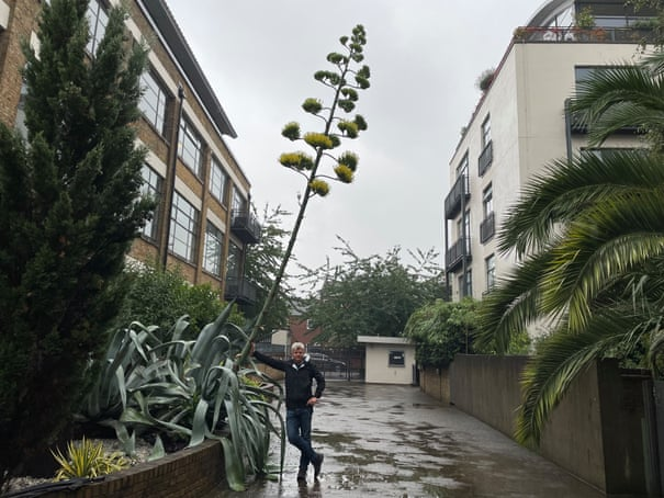 My towering agave plant is in full bloom – but it's a bittersweet bonanza